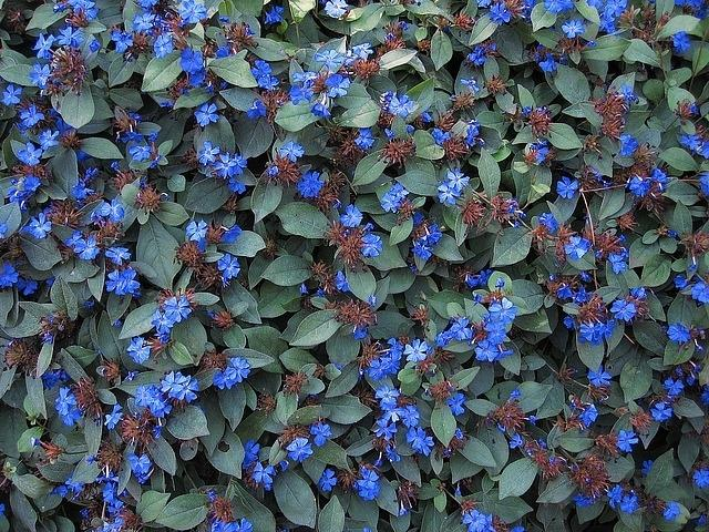 List Of Perennial Flowers Hardy | Gardening: Flower and Vegetables